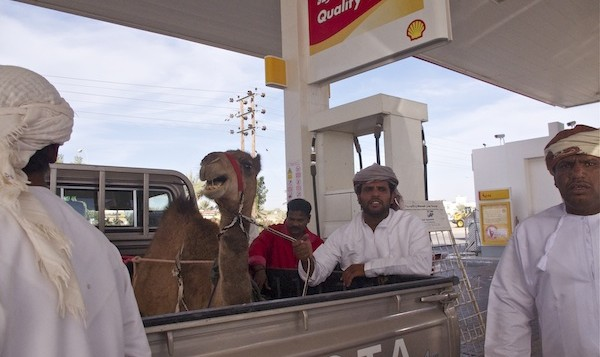 angry camel at the gas station_klein