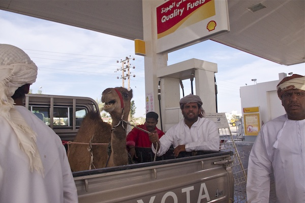 angry camel gas station oman