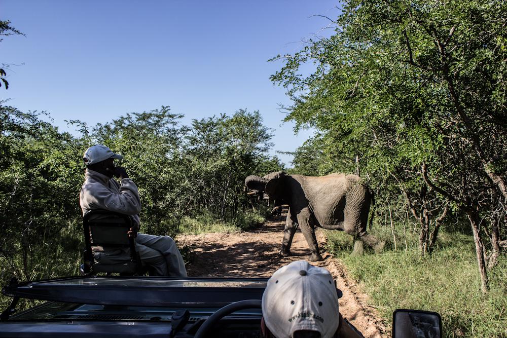 elephant Big five south africa