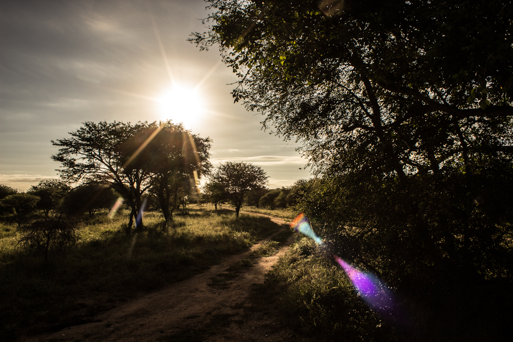 lens flare Big five south africa