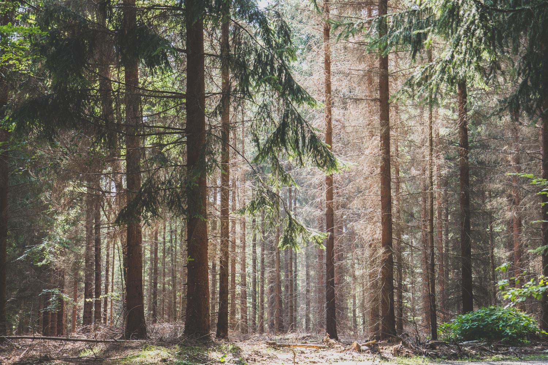 Sächsische Schweiz Malerweg