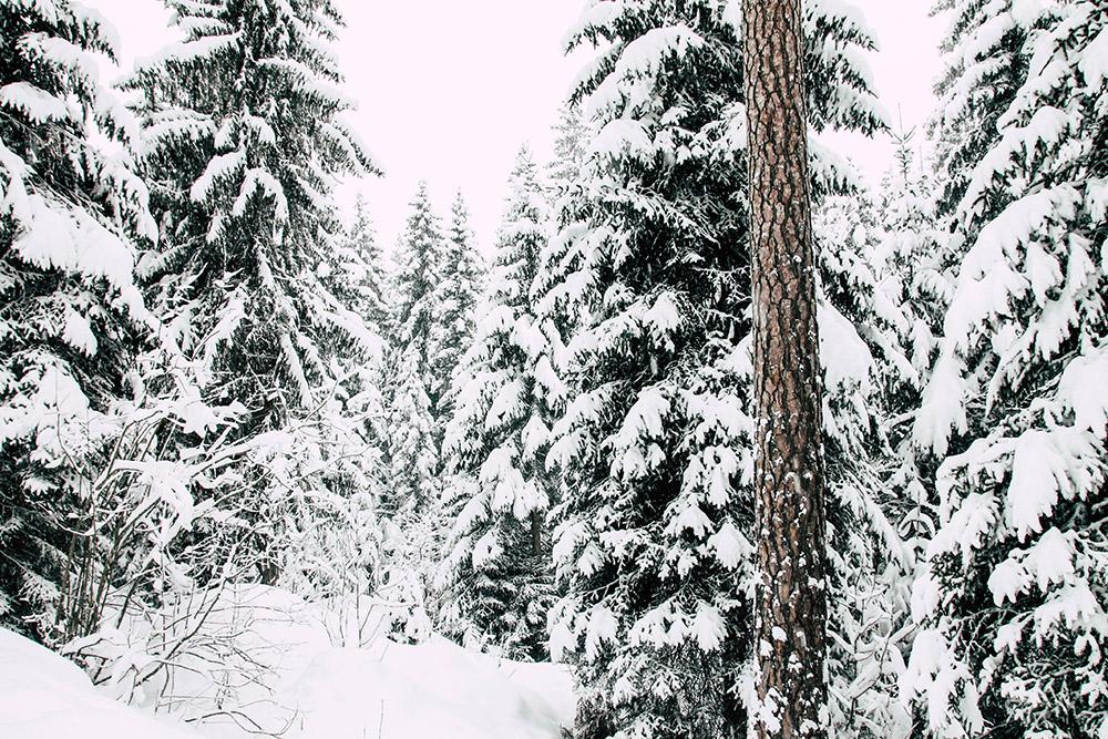 Blick auf einen Wald in Flims