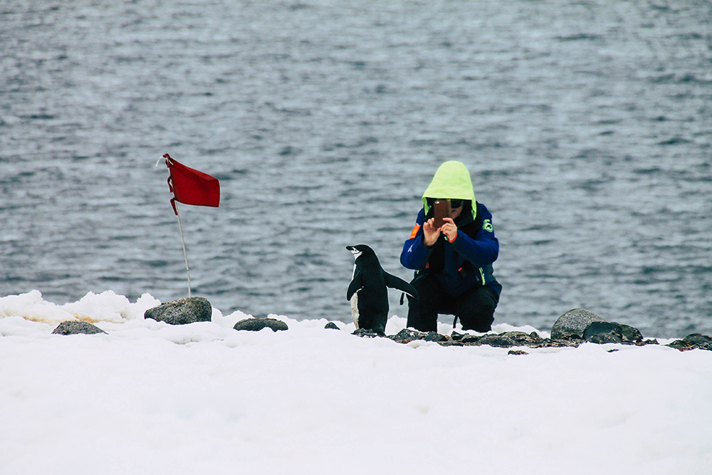 Person fotografiert Pinguin in der Antarktis