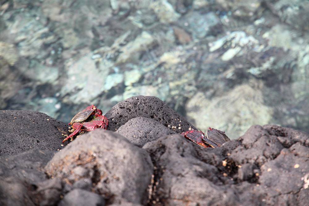 Krabben auf den Kanarischen Inseln